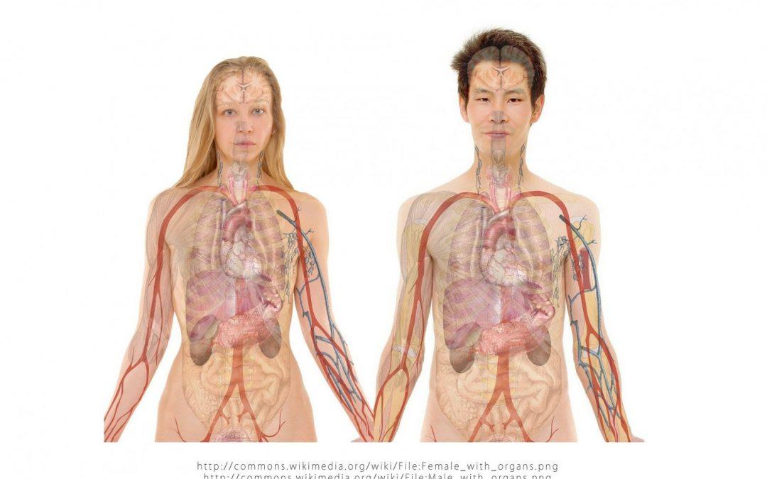 Die Organuhr – Was Qi ist, wie sich Stress auf die Organuhr auswirkt & wie du deine Organe stärken kannst